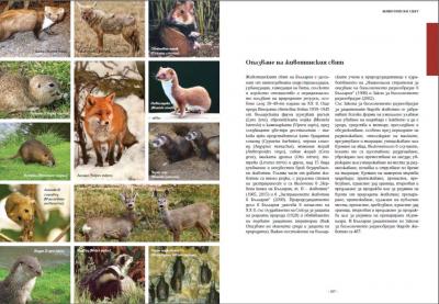 Енциклопедия България